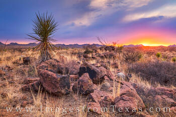 big bend ranch state park, sunset, chihuahuan desert, big bend, yucca, texas landscape