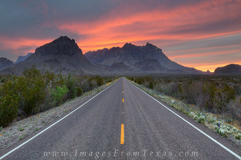 Big Bend National Park images,Big Bend images,Texas Wildflower images,Texas wildflower photos,Texas wildflowers