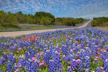 bluebonnets,texas wildflowers,country roads,texas landscapes,texas hill country,texas prints