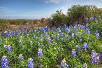 bluebonnet photos,texas wildflower photos,texas landscapes