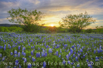 bluebonnets, wildflowers, texas hill country, sunset, dirt road, evening, color, blue, texas bluebonnets, llano, mason, travels