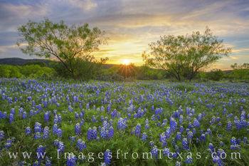 Texas Bluebonnet Sunset 410-1