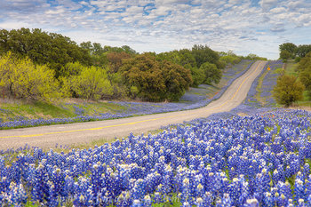 Bluebonnet Highway in the Hill Country