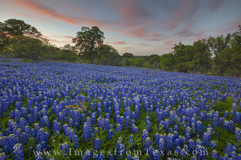 bluebonnets, texas wildflowers, bluebonnet prints, texas wildflower photos, texas hill country, hill country images, san saba, texas landscapes