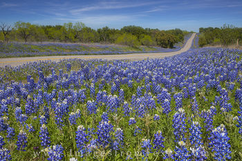 Texas Highways and Bluebonnets