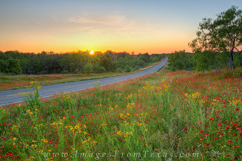 texas wildflowers, texas hill country, red wildflowers, yellow flowers, roadside wildflower displays