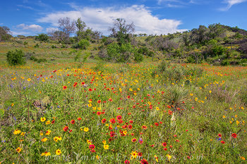 texas hill country,texas wildflowers,texas hill country wildflowers,texas landscapes,wildflower images,hill country photos