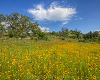 texas wildflowers,wildflower photos,texas hill country,texas landscapes,wildflower prints,llano