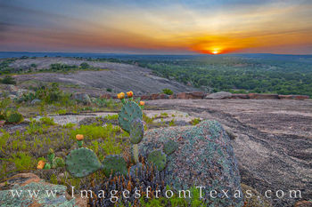 sunset, hill country, prickly pear, cactus, lizard, enchanted rock, little rock