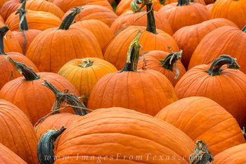 Texas Images - October Pumpkins 4