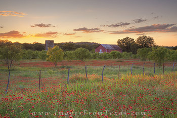 Texas Reds - Wildflowers at Sunset 3