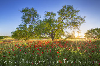 texas wildflowers, texas flowers, wildflowers, texas wildflower images, paintbrush, indian blankets, texas hill country, spring, llano, dirt road, texas spring, sunset
