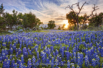 bluebonnet images,texas wildflowers,texas hill country,bluebonnet prints,texas landscapes,texas spring,texas sunset