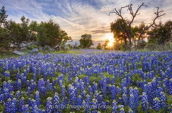 Texas Sunset over Bluebonnets 2