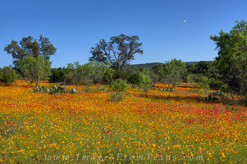 Colors of the Texas Hill Country Spring