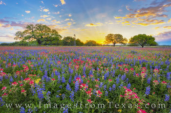wildflowers, bluebonnets, indian paintbrush, windmill, ataascosa county, poteet, sunrise, south texas, red, blue, yellow