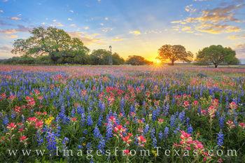 Texas Wildflowers Sunrise Glory 319-2