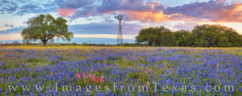 South Texas Wildflower Sunrise Panorama 319-1