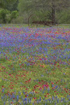 texas wildflowers, texas landscapes, wildflowers, luling texas, spring, texas spring, texas