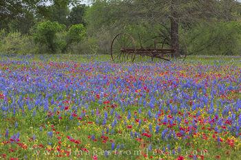 Texas Wildflowers in Luling 1