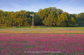 Texas Wildflowers on Easter 2