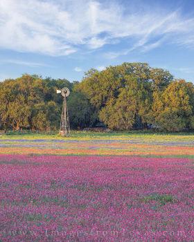 Texas Wildflowers on Easter 3