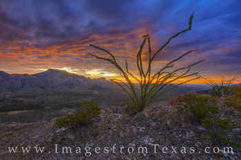 big bend ranch state park, big bend ranch, solitario, fresno canyon, west texas, ocotillo, sunrise, rugged, texas landscape, morning, chihuahuan desert
