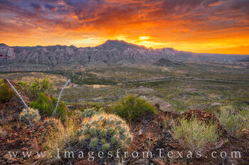 solitario, fresno canyon, big bend ranch, cacti, west texas, sunrise, orange, hiking, exploring texas, remote, rugged