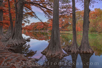 cypress, garner state park, fall, autumn, frio river, evening, november, orange