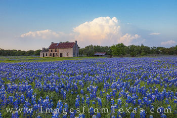 thunderheads, storms, bluebonnets, bluebonnet house, marble falls, wildlfowers, texas wildflowers, texas bluebonnets, bluebonnet images