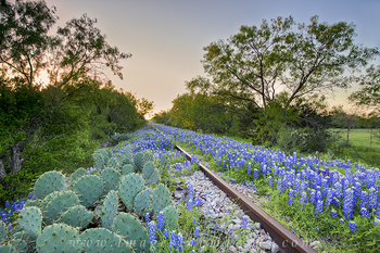 bluebonnets,texas wildflowers,traintracks,Kingsland,texas hill country