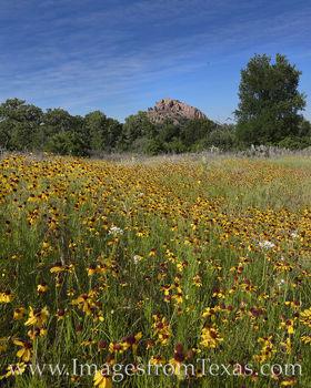 Turkey Peak Wildflowers 428-3