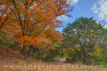 lost maples prints, fall colors, autumn, maple trees, red, orange, november, hiking, state park