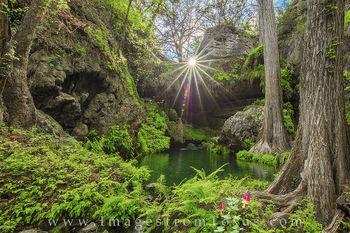 Westcave Preserve Wildflowers 1