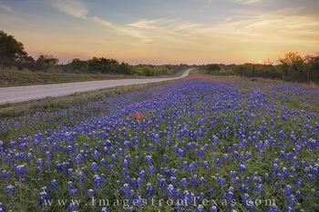 Wildflower Highway Sunrise 1