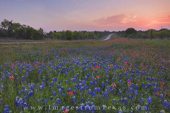 Wildflower Highway Sunrise 3