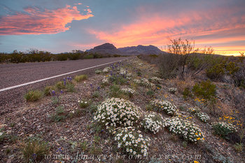 big bend national park images,big bend photos,big bend wildflowers,texas wildflowers,texas sunset