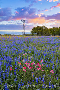 bluebonnets, paintbrush, red, blue, windmill, wildflowers, poteet, Atascosa county, groundsel, morning, peace