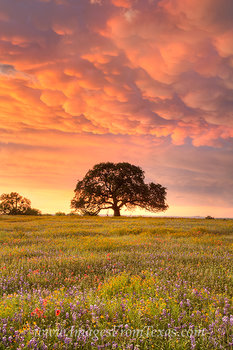 texas wildflowers,texas wildflower photos,texas landscapes,mammatus clouds,texas images