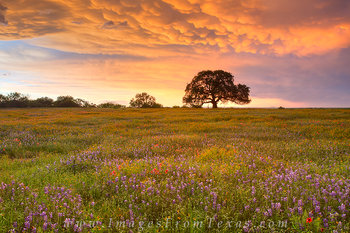 texas wildflowers,wildflower photos,texas hill country,hill country sunset,texas in spring,bluebonnets,texas landscapes
