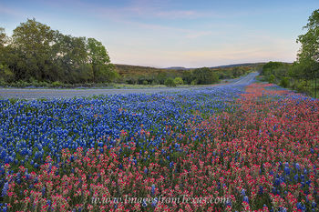 texas wildflowers,texas bluebonnets,bluebonnet images,wildflower photos,texas hill country,texas hill country photos