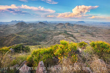 oso peak, oso mountain, big bend ranch, big bend ranch state park, october, wildflowers, gold, clouds, desert, beauty