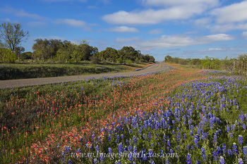 Wildflowers along a Texas Highway 1