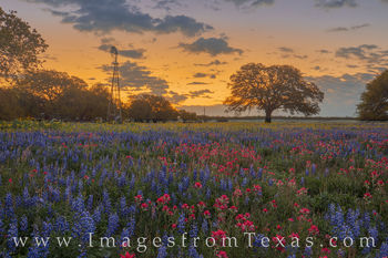 bluebonnets, paintbrush, windmill, sunrise, poteet, wildflowers, morning, spring, yellow, gold, orange, peace