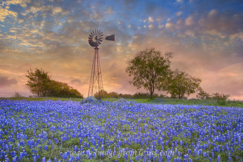 Windmill and Bluebonnets in the Morning 3
