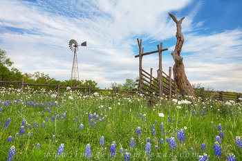 blubeonnets,texas hill country,windmill,wooden fence,texas wildflowers,poppies,texas landscape