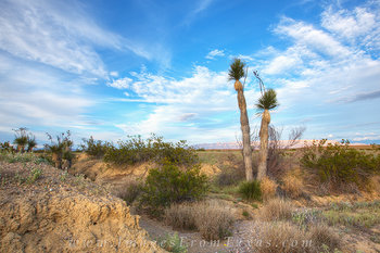 big bend,big bend pictures,yuccas,texas landscapes