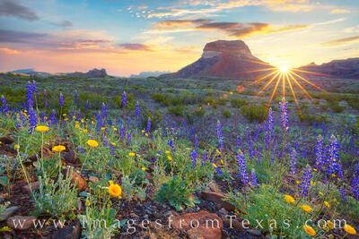 big bend, bluebonnets, texas wildflowers, texas landscapes, sunrise