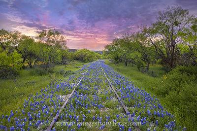 bluebonnets,train tracks,texas wildflowers,bluebonnet prints,texas wildflower pictures,texas hill country,Kingsland,railroad