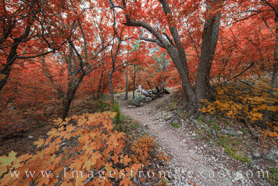 McKittrick Canyon, Guadalupe Mountains, Guadalupe Mountains National Park, Texas fall colors, Texas national parks, autumn colors, west texas, texas hiking, texas hikes
